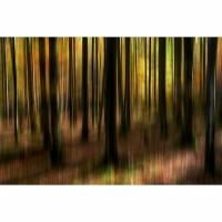 """12. """"Waldgemälde"""" von Herbert Hutflesz"""