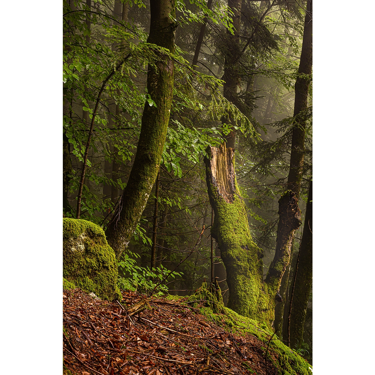 """21. Hemetsberger Florian - """"Der alte Baum"""""""