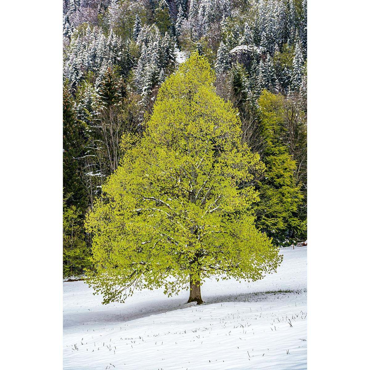 "27. Bleier Fritz - ""Wintereinbruch im Frühling"""