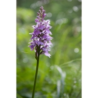 """23. Zrnjanowitsch Christine - """"Orchidee"""""""