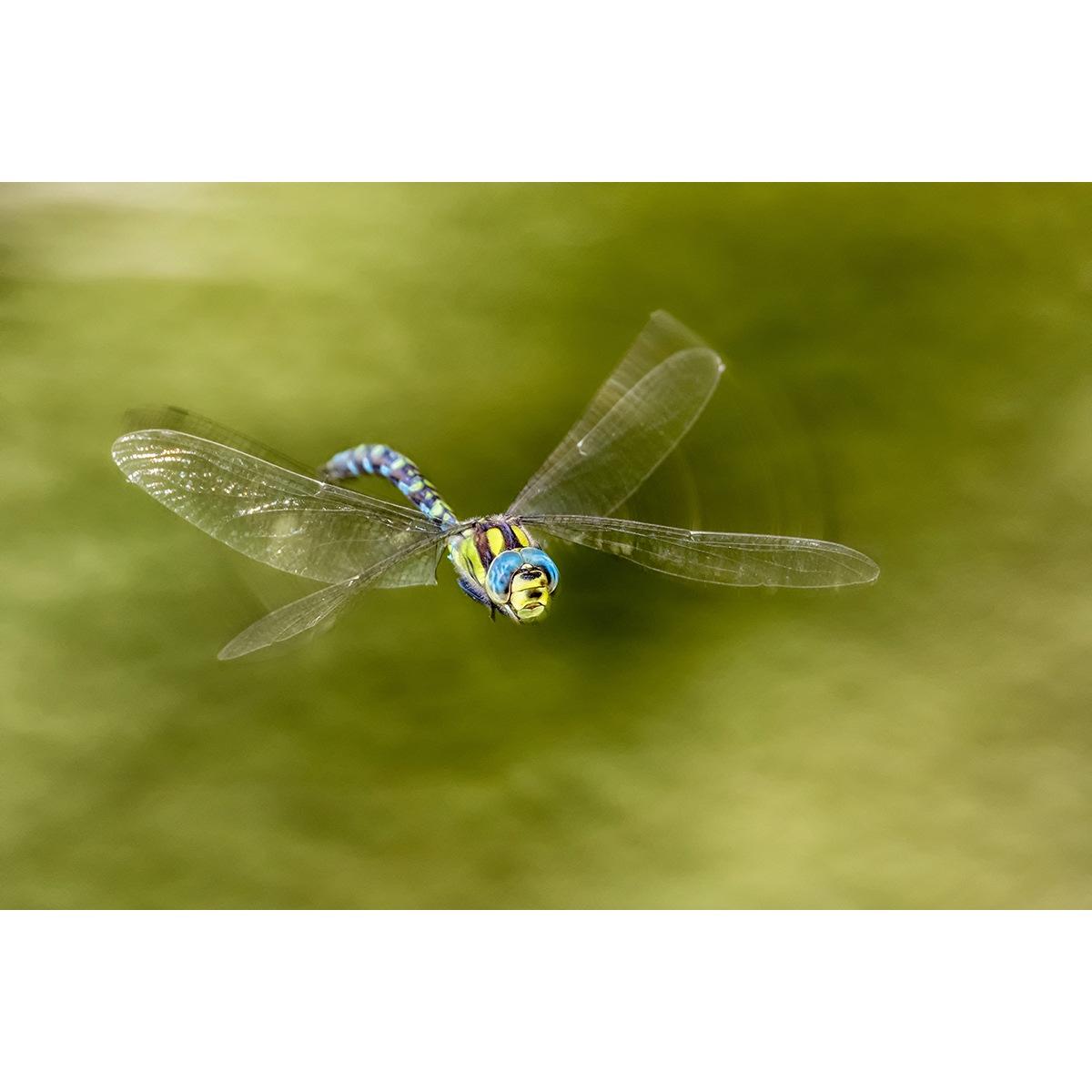 """4. Lampesberger Karl - """"Libelle im Flug"""""""
