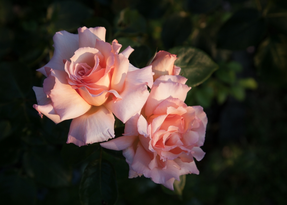 der-Name-der-Rose . . .